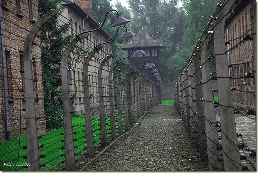 בין הגדרות באושוויץ